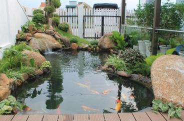 Thi công hồ cá KOI